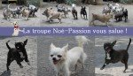 <b>troupe noe passion</b> <br />